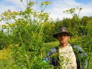 Weed management professional Mike Bald with a large wild parsnip plant.
