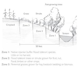 Streamside buffers can protect crops and improve water quality.