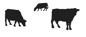 Silhouette of three cows