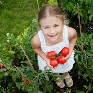 Should hydroponic tomatoes be eligible for organic certification?