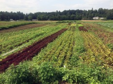 9,168 — Acres brought into organic management by 37 producers newly certified by Vermont Organic Farmers (VOF), the certification program of NOFA Vermont, bringing the total to more than 110,000 acres.